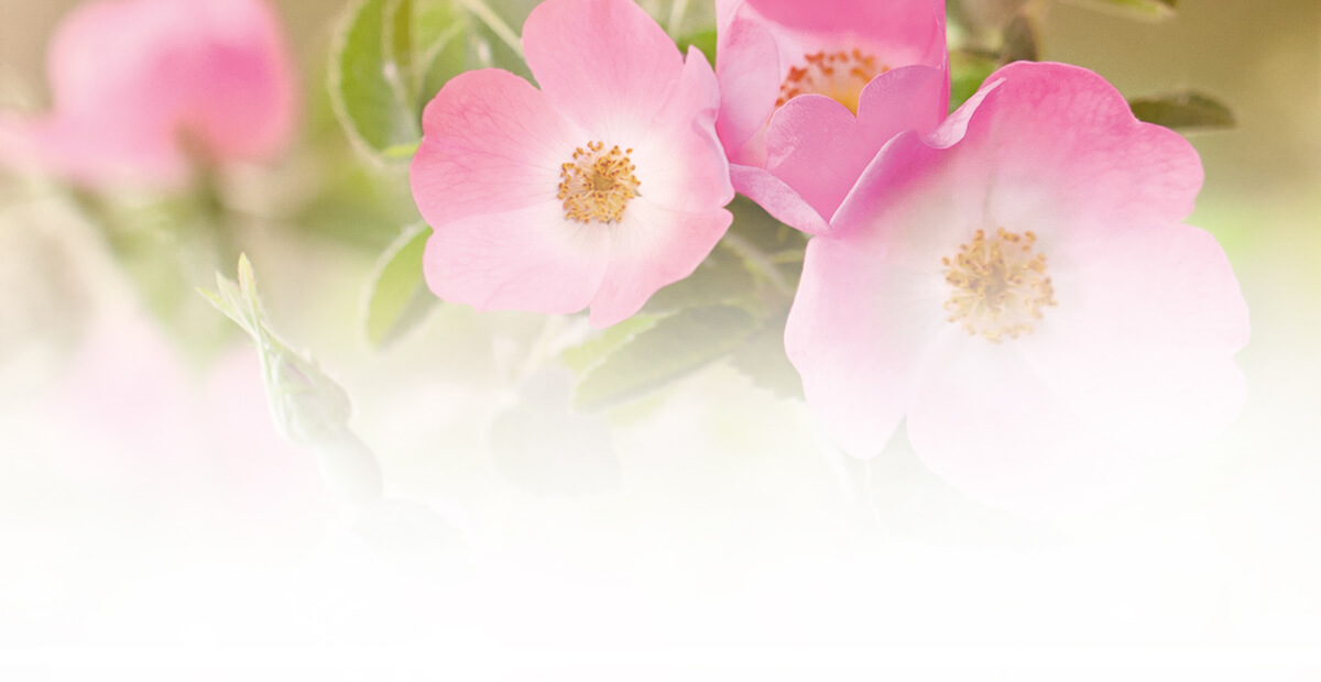 Rosa Moschata Seed Oil