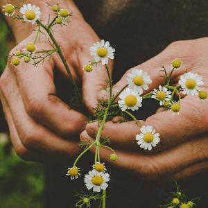 El poder de las plantas para nutrir el cabello